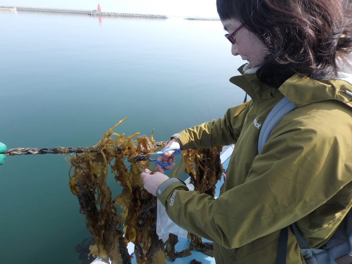造園のあまがえるがなぜ海?〜大阪湾見守りネットのフォーラム行って来ました。