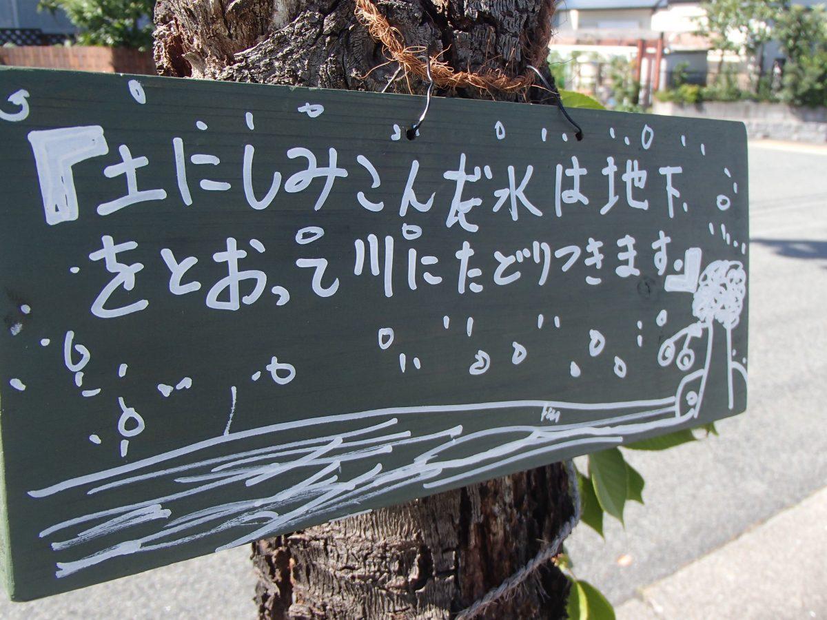 年に一度だけの !?     街路樹の集い